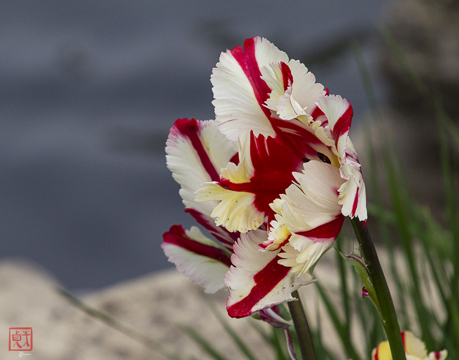 Bring forth a Flower