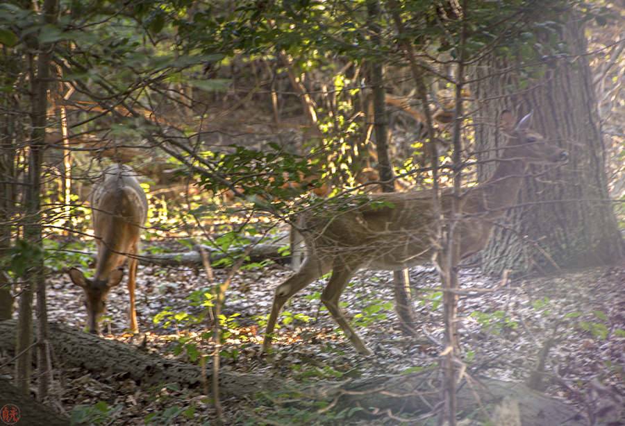 Living in Harmony with the Doe